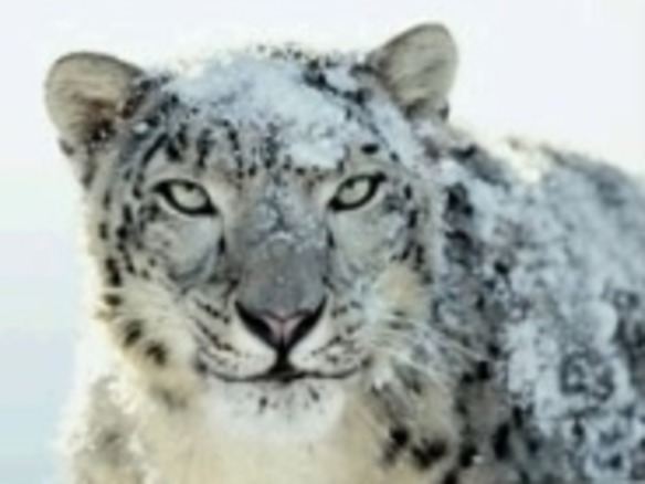 Mac OS X 10.6 Snow Leopardは8月28日に発売