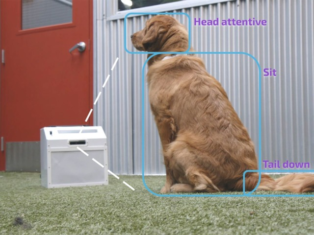 "Photo of New machine "" CompanionPro '' to train dogs with AI and computer vision"