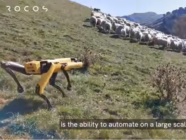 """Photo of Boston Dynamics Quadruped Robot """"Spot"""" Becomes """"Sheep Dog"""" in New Zealand"""